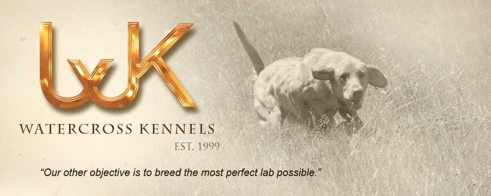 Labrador puppies for sale el paso tx